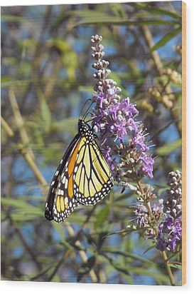 Monarch On Vitex Wood Print