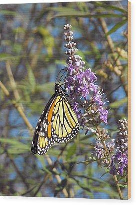 Monarch On Vitex Wood Print by Jayne Wilson