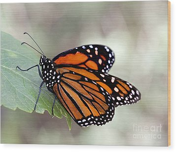 Monarch Resting On A Leaf Wood Print