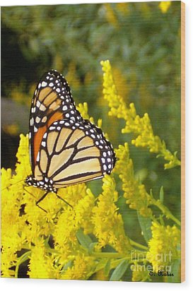 Wood Print featuring the photograph Monarch by Sara  Raber
