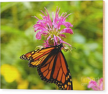 Monarch Under Flower Wood Print