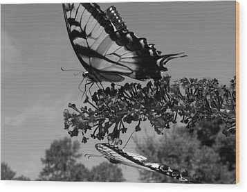 Swallotail In Black And White Wood Print by Kim Galluzzo Wozniak