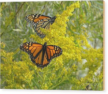 Wood Print featuring the photograph Monarchs On Goldenrod by Susan  Dimitrakopoulos