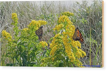 Monarchs On The Beach Wood Print