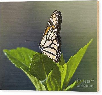 Monark Butterfly No. 2 Wood Print
