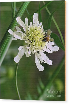 Wood Print featuring the photograph Monet's Garden Bee. Giverny by Jennie Breeze