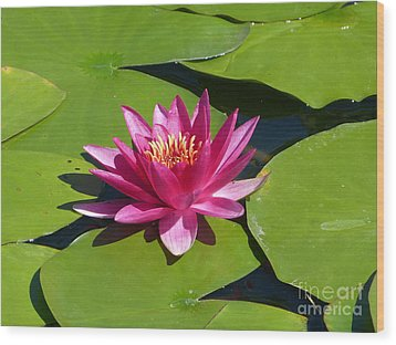 Monet's Waterlily Wood Print by Marguerita Tan