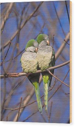 Monk Parakeets Wood Print