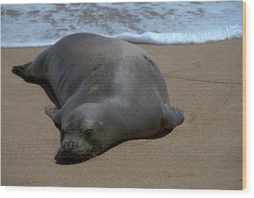 Monk Seal Sunning Wood Print by Brian Harig