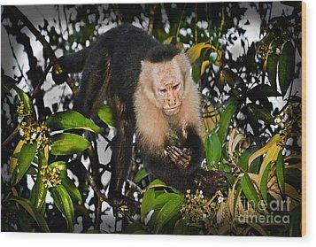 Monkey Business  Wood Print by Gary Keesler