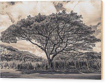 Monkey Pod Tree Wood Print by Robert  FERD Frank