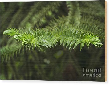 Wood Print featuring the photograph Monkey Puzzle by Maria Janicki