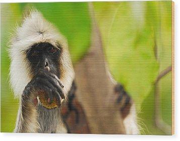 Monkey See Wood Print by Stefan Carpenter