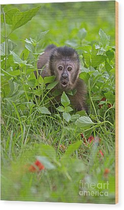 Monkey Shock Wood Print by Ashley Vincent