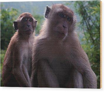 Monkey's Attention Wood Print by Kaleidoscopik Photography