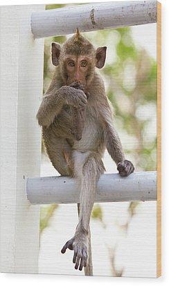 Monkeys Cute Sitting On A Steel Fence Wood Print by Tosporn Preede