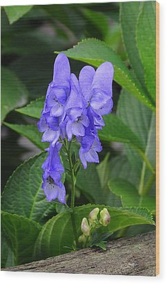 Wood Print featuring the photograph Monkshood Blossom by Paul Miller