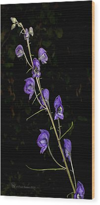 Monkshood Wood Print