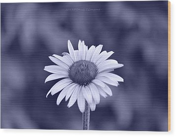 Monochrome Aster Wood Print by Sonali Gangane