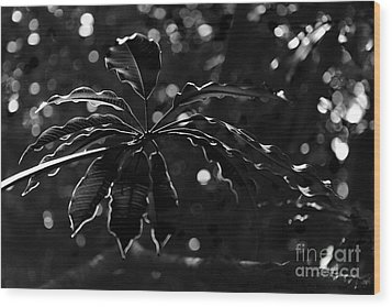Monochrome Leaf  Wood Print
