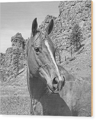 Montana Horse Portrait In Black And White Wood Print by Jennie Marie Schell