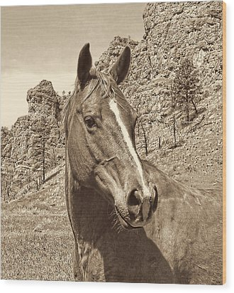 Montana Horse Portrait In Sepia Wood Print by Jennie Marie Schell