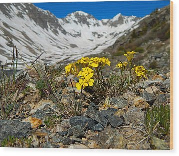 Blue Lakes Colorado Wildflowers Wood Print by Dan Miller