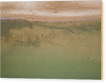 Montrose Beach Dog Park Wood Print by Adam Romanowicz