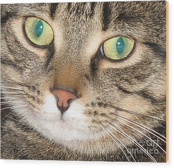 Monty The Cat Wood Print by Jolanta Anna Karolska