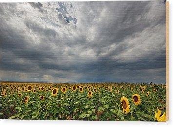 Wood Print featuring the photograph Moody Skies Over The Sunflower Fields by Ronda Kimbrow