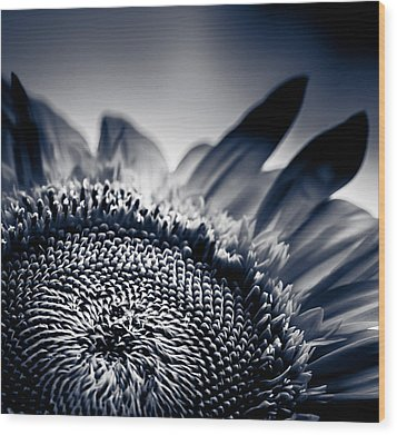 Moody Sunflower Wood Print by Isabel Laurent