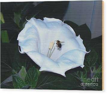 Wood Print featuring the photograph Moon Flower by Thomas Woolworth