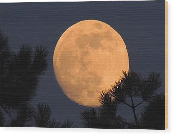 Wood Print featuring the photograph Moon Pines by Charlotte Schafer