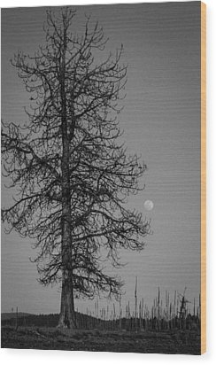 Wood Print featuring the photograph Moon Tree by Jan Davies