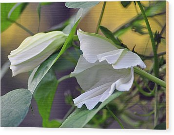 Moonflowers  Wood Print by Gail Butler