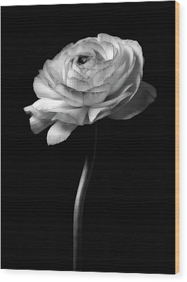 Black And White Roses Flowers Art Work Photography Wood Print