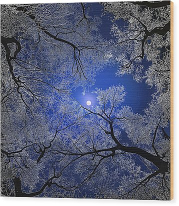 Moonlight Trees Wood Print by Igor Zenin
