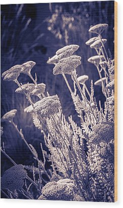 Moonlight Yarrow Wood Print by Dave Garner