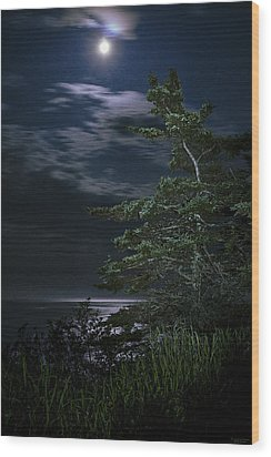 Moonlit Treescape Wood Print by Marty Saccone