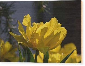 Moonlit Tulips Wood Print by Maria Urso
