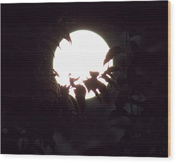 Moonshine 14 Flying Sea Horse Wood Print