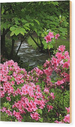 Moonshine Creek Rhododendron Bloom - North Carolina Wood Print by Mountains to the Sea Photo