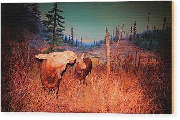 Moose ..algonkian Wood Print by Larry Trupp