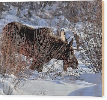 Wood Print featuring the photograph Moose At Sunset In Winter by Yeates Photography