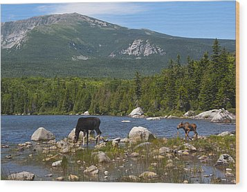 Moose Baxter State Park Maine Wood Print