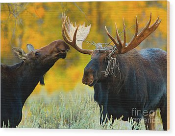 Wood Print featuring the photograph Moose Be Love by Aaron Whittemore