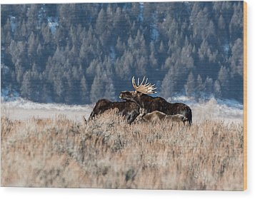Wood Print featuring the photograph Moose Family Pride by Yeates Photography