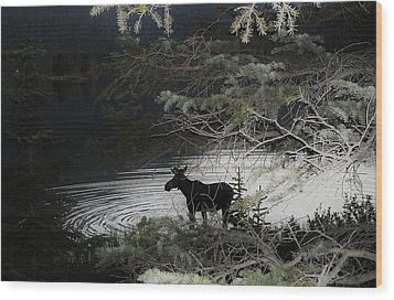 Moose Has Happy Hour Wood Print by Cathy Long