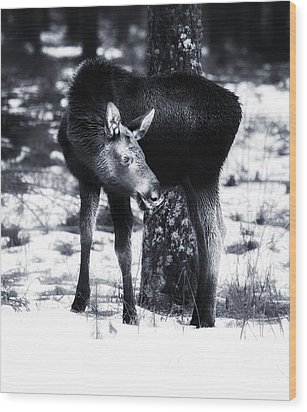 Wood Print featuring the photograph Moose by Rose-Maries Pictures