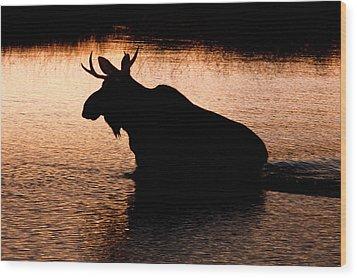 Moose Silhouette 3569   Wood Print by Brent L Ander